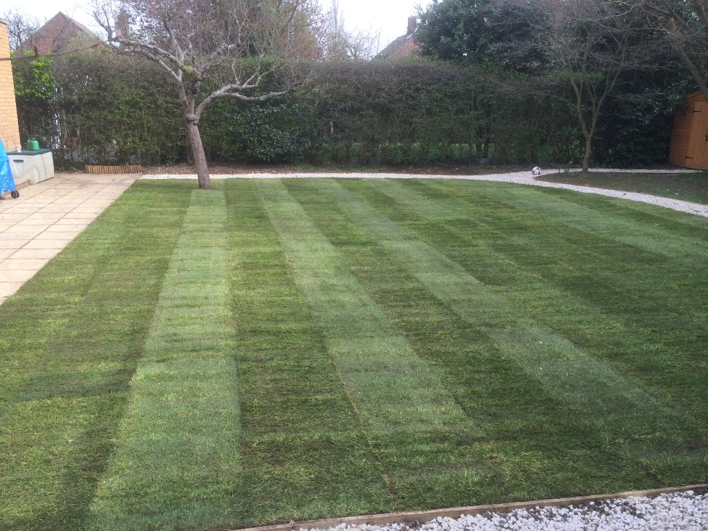 Domestic soft landscaping Turfing