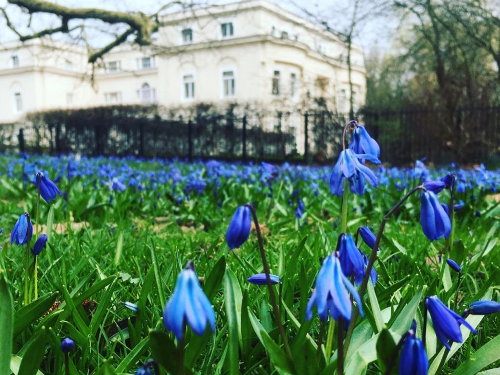 Estate Management Parks and Gardens 4 - Bluebells